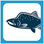 saumon pecheur.com