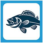 picto-blog-bass