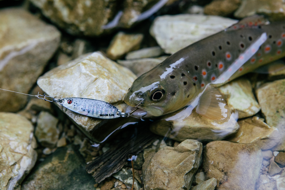 brown-trout-on-real-life-trout-pattern-from-sakura