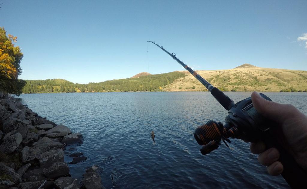 Quel moulinet choisir pour pêcher en big bait ?